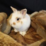 Fotoshoot Kaninchen 366