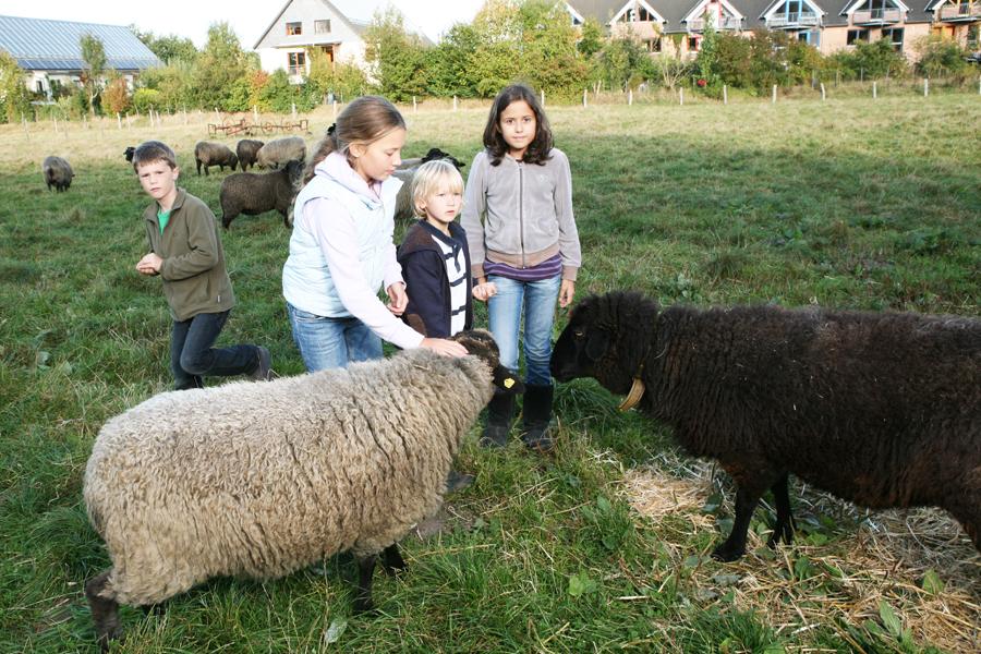 Frühstück für die Schafe
