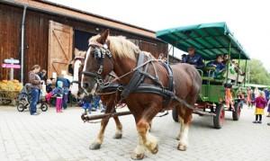 Pferdekutsche©Andresen für Gut Karlshöhe