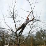 Naturnaher Obstbaumschnitt