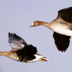 Heiße Temperaturen beeinflussen Vogelzug