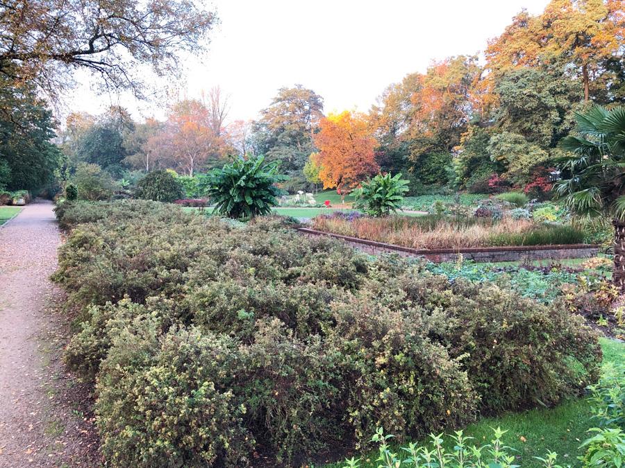 Welche Pflanzen fehlen im Botanischen Sondergarten?