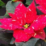 Weihnachtliche Gartenwissen-Angebote im Botanischen Sondergarten Wandsbek