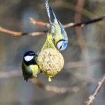 Vogelfütterung im Winter: Lebenswichtige Hilfe für Wildvögel