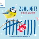 Neues Trio auf dem Treppchen: Kohlmeise ist Hamburgs häufigster Wintervogel