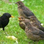 Hamburgs Natur hat nicht geschlossen / Naturerlebnisse in Zeiten von Corona