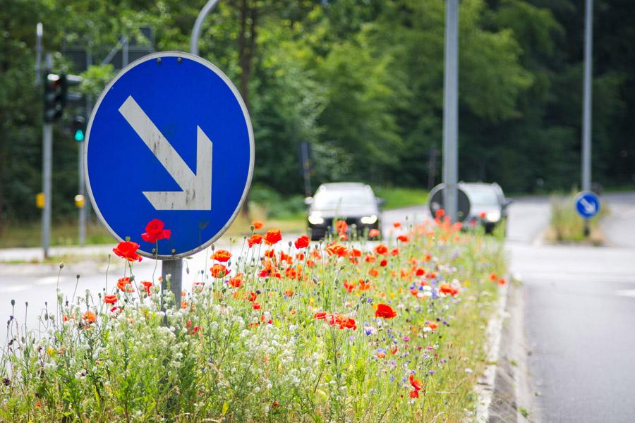 Straßenbegleitgrün: Kleine Flächen mit großer Wirkung
